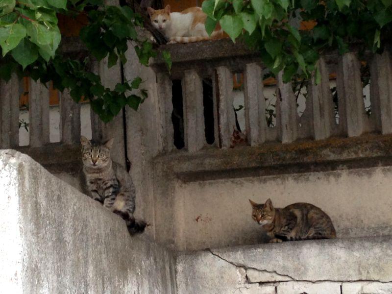 Котики в Крыму
