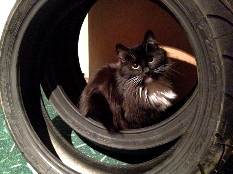 Кошка радуется новой мото резине